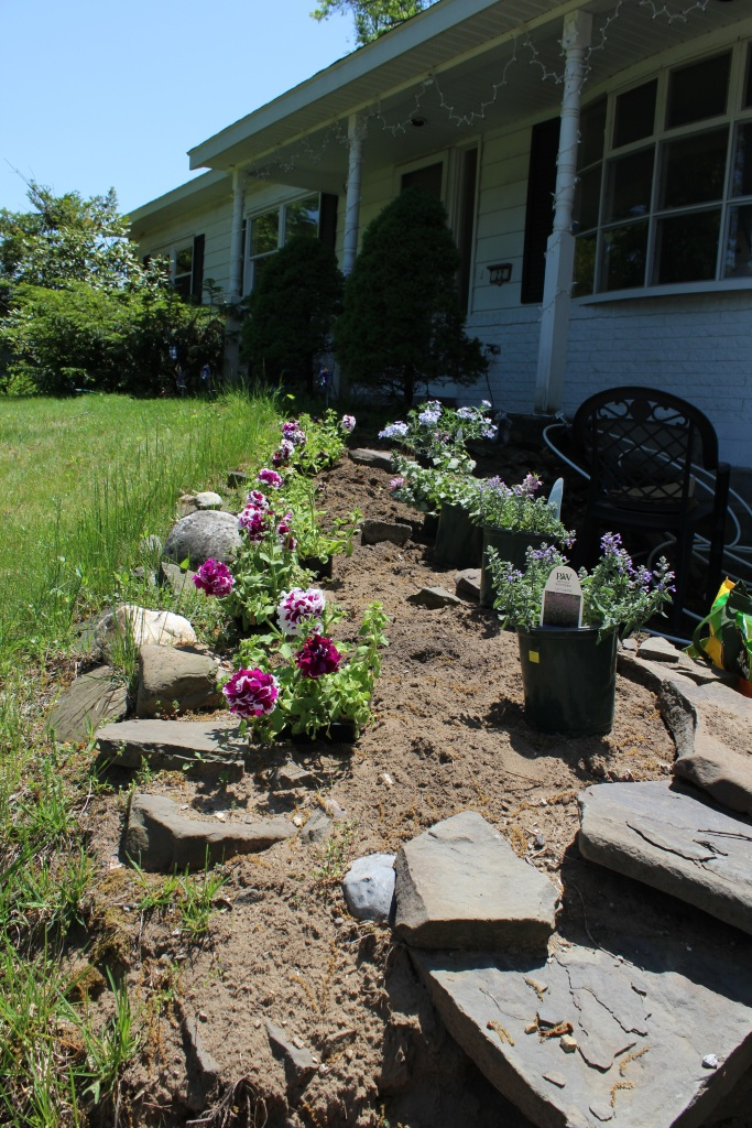 There is grass on the left, a stone retaining wall on the right bordering the walkway up to our front door. There is a row of purple and white carnations on the left hand side of the planting area, and on the right there are green and lavender colored flowers.